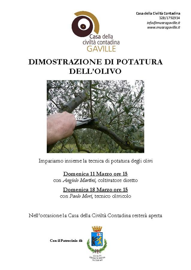 Dimostrazione di potatura dell'olivo