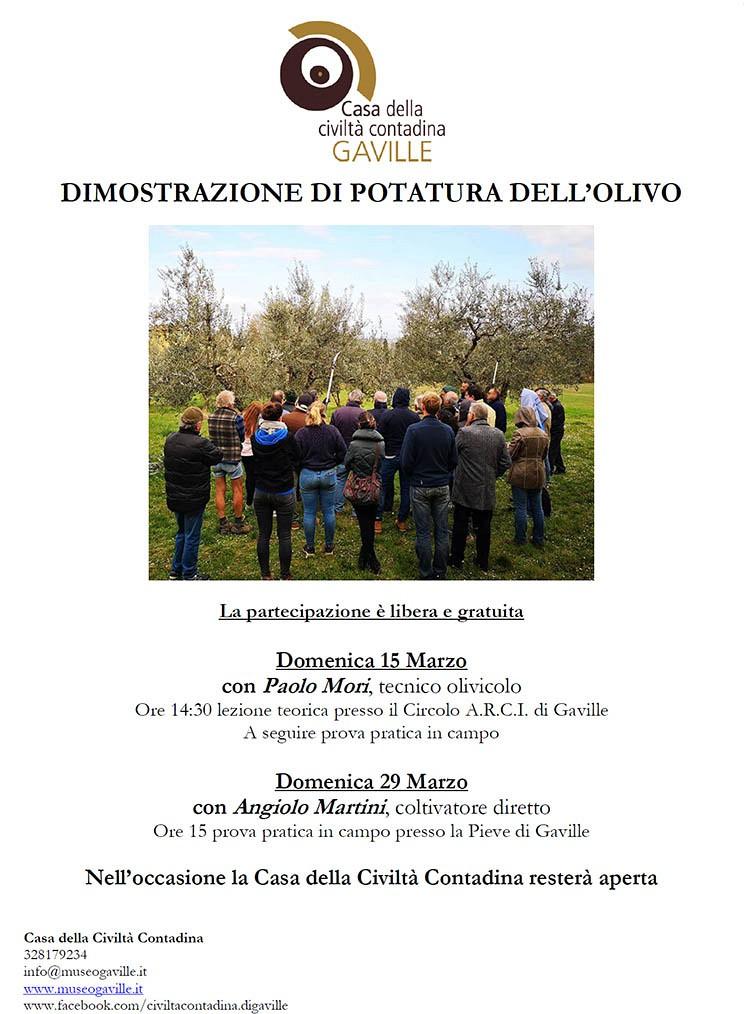Dimostrazione potatura dell'olivo a Gaville - ANNULLATO