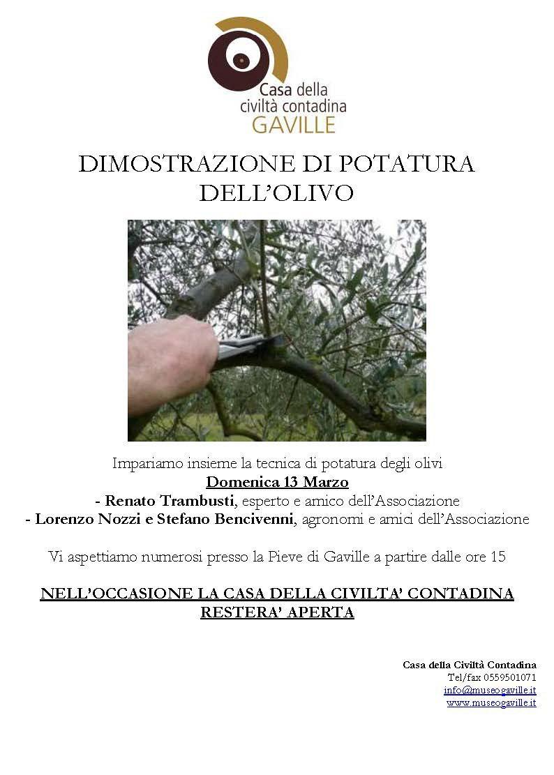 Dimostrazione potatura dell'olivo - 13 Marzo